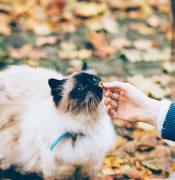 Feeding a cat with a treat