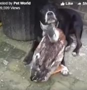 dog and duck .jpg