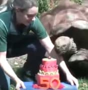 turtle birthday.jpg