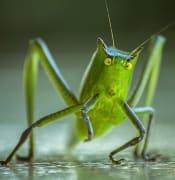 cricket-1345065_960_720.jpg