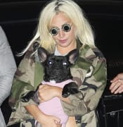 20210226001523238718 original lady gaga dog