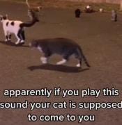 tiktok cat call