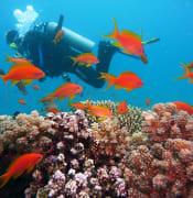 diving 1808717 640