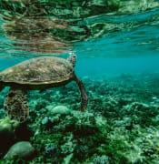 Reef_Turtle.jpg