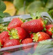 strawberries 5696336 640