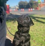 Police Dog Fang