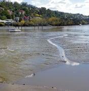 Tamar River