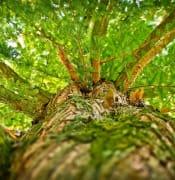 tree megan 1750784 1920