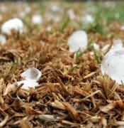 hailstone-1614239_1280.jpg