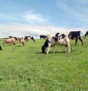 hunter-dairy-development-group.jpg