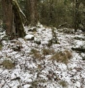 police-warning-snow-chasers-to-be-careful-at-the-barrington-tops.jpg