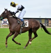 race horse 715628 960 720