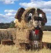 Hay Dog