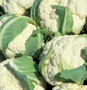 cauliflower 805414 640 Image by skeeze from Pixabay
