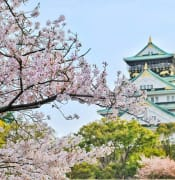 close up photography of cherry blossom tree 1440476