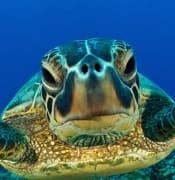 home_turtle.jpg
