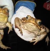 toads2.jpg