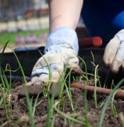 gardeningg.JPG