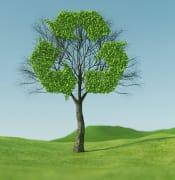 tree 5591461 640