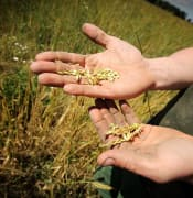 farmer hands.jpg