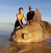 sunfish Jacob Jones Clay Brown