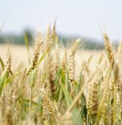 arable-blur-close-up-265216.jpg