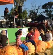 Cadell harvest festival