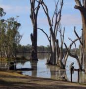 River Murray flickr