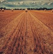 Farm Hay Bale Pexels
