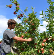backpacker_fruit_picker_Photo_Apple_and_Pear_Australia_Ltd_Flickr.jpg