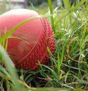 cricket 2533791 640