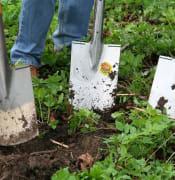 gardening-331986_960_720.jpg
