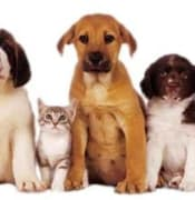 pets.dog.cat.jpg