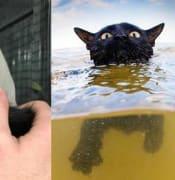 beach cat 3