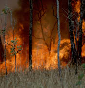 1024px-CSIRO_ScienceImage_391_Burning_as_Land_Management_1_1.jpg