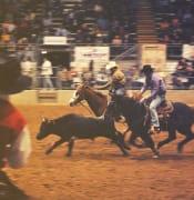 rodeo-2617959_1920.jpg