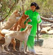 Yuan and Dingoes ballarart wildlife park year of the dog .JPG