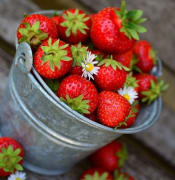 strawberries-3431122_640 PIXABAY.jpg