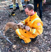gigi red heeler dog mineshaft creswick mar 2019 cfa mine rescue IMG 1321