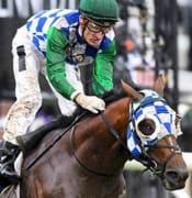 fifty stars Horse nov 2019 pic Racing Photos cantala 660x380rp
