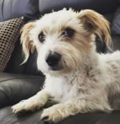 olly female dog missing from wallace acco nov 2019 pic gail G 9503