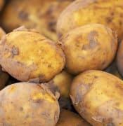 potato-3440360_640.jpg