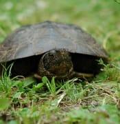 turtle-1517920_1920.jpg