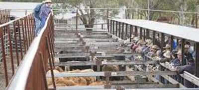 SINGO SALEYARDS.jpg