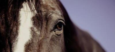 horse-594191__340_1.jpg