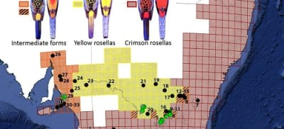 Rosella map (1).jpg