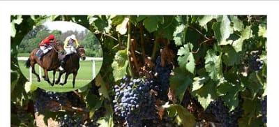Vinnies in the Vineyards 2.jpg