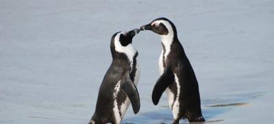 penguin luv.jpg