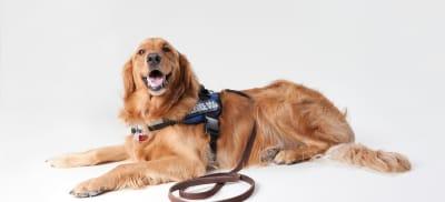 service dog.jpg