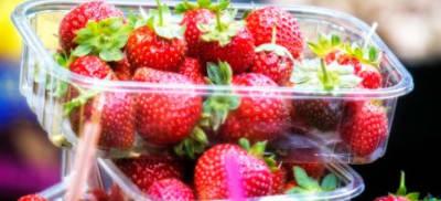 strawberryneedle_photo1.jpg